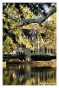 Spring Light at Afton Library - Yardley, PA
