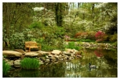Azalea Time - Sayen Gardens, NJ