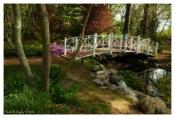 Path To The Bridge - Sayen Gardens, NJ