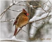 Snowflake, New Britain, PA